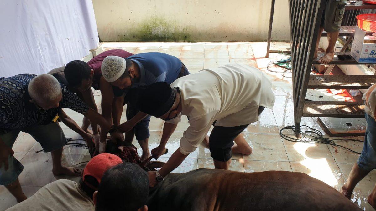 Idul Adha 1441, Kurban di Kota Padang Capai 7.053